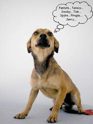Sua cachorrinha e amigo me chupando - 2 part 7