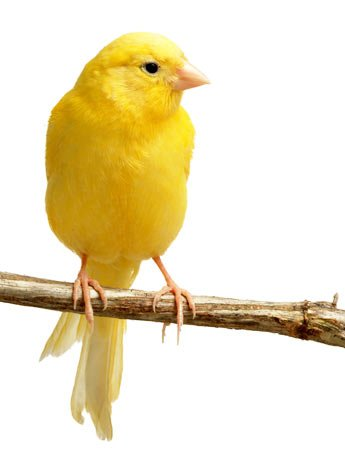 Cuidados básicos com aves