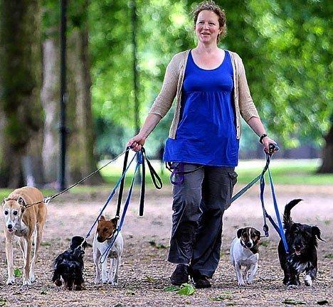 Dogwalker münchen