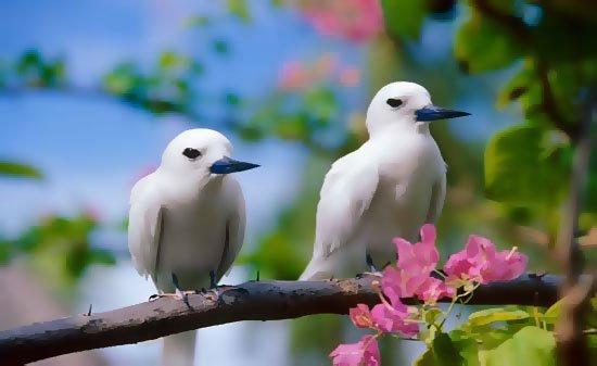 Descobrir sexo dos pássaros