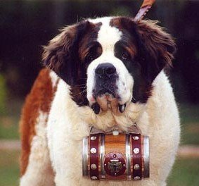 Cuidados com cachorro São Bernardo