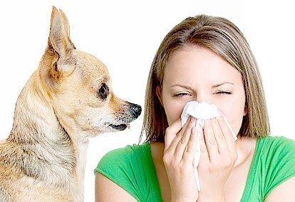 Alérgico a Cachorro