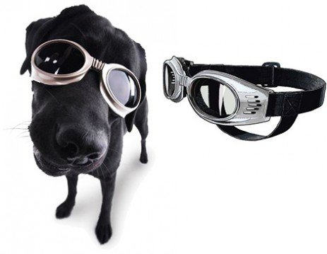 Óculos para cães! Onde comprar e para que servem! - Estimação 669f24eb58