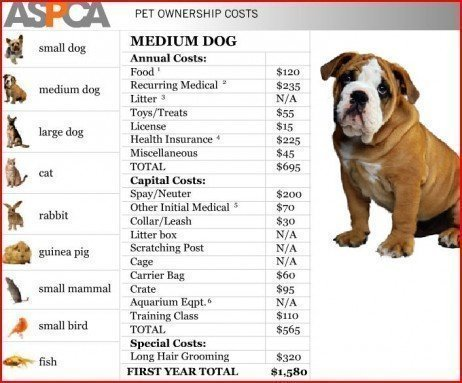 How Much To Own A Dog Per Year