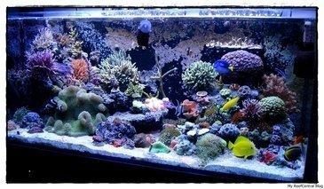 Como montar um aquário de água salgada?