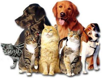 Resultado de imagem para imagens de animais juntos