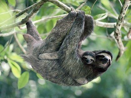 Quais os animais mais exóticos do Brasil?
