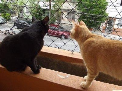 Porque não deixar os gatos fugirem?