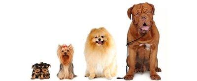 Como escolher um cachorro ideal?