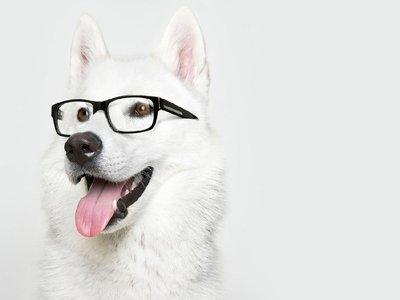 9983defa0f8c1 Problemas de visão em cães! Como descobrir e resolver! - Estimação