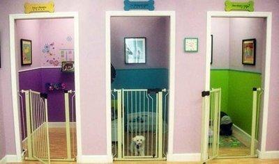 Hotel para cachorro como escolher um que cuide bem do seu for Cute hotel rooms