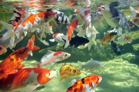de peixes se movendo